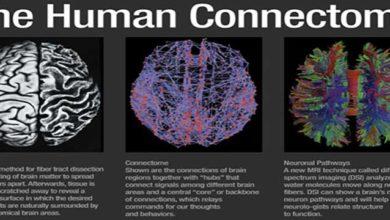 connettoma-umano